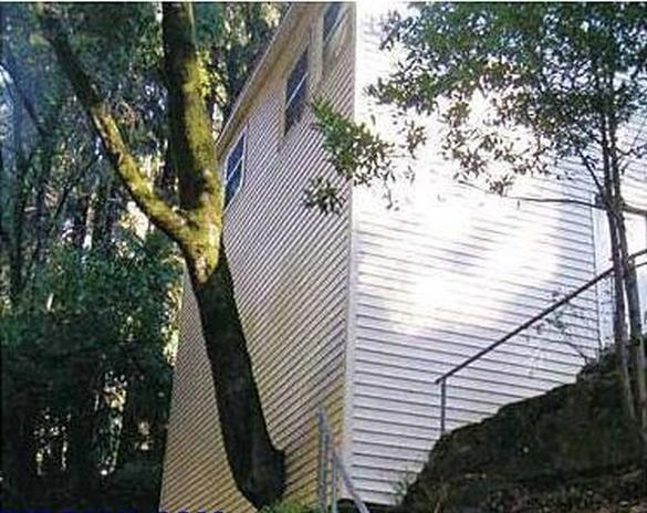 Contractor Mistakes - Tree Coming out of House