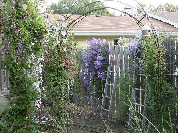 Diy Garden Arch Photograph Diy Garden Arch